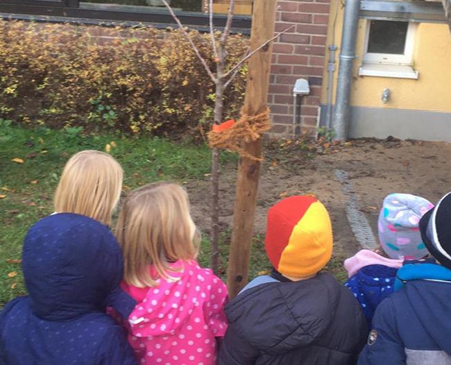 Kids betrachten den jungen Kirschbaum.
